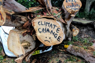 climate change tree trunk (1 of 1)