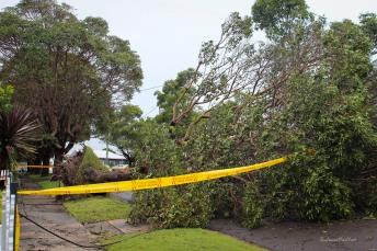 fallen tree orlando (1 of 1)